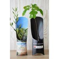 ETUI ARBRE- PLANTS PRESTIGE: OLIVIER