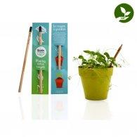 Aliocha - Crayon à graines + étui personnalisable - LE cadeau CE