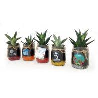 Lorina - Plante en bocal publicitaire - LE cadeau CE